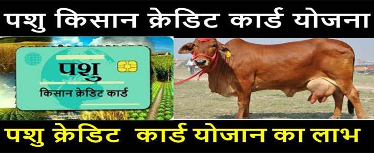 Haryana PKCC